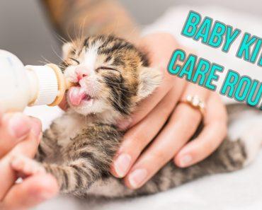 Kitten Nursery Care Routine for Neonates!