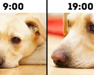 10 Mistakes That Shorten Your Pet's Life