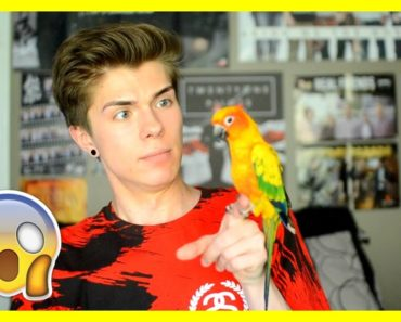 WATCH THIS BEFORE GETTING A PET BIRD (feat. Mango)!