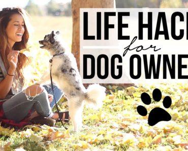15 Life Hacks for Dog Owners! Pet Care Tips + Tricks | Ariel Hamilton