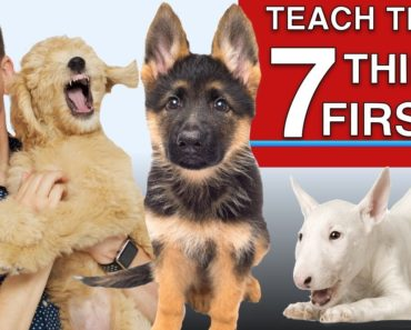 How to Teach The First 7 Things To Your Dog: Sit, Leave it, Come, Leash walking, Name…)
