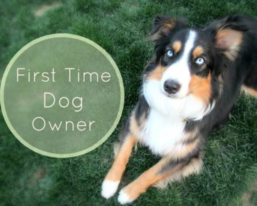 Tips For First Time Dog Owners |Life With Aspen|