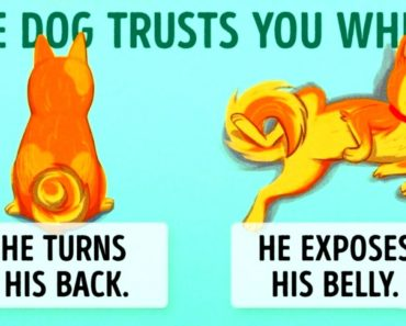 16Useful Clues To Understand Your Dog Better