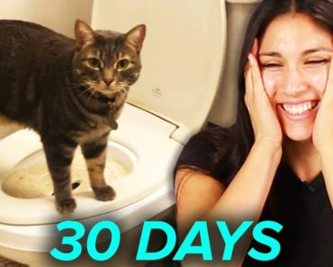 I Tried Training My Cat To Use A Toilet In 30 Days