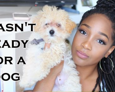 I Wasn't Ready For a Dog | Tips for New Puppy Owners + New Puppy Must Haves