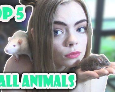 TOP 5 BEST BEGINNER SMALL PETS!! (Cute furry pets!)