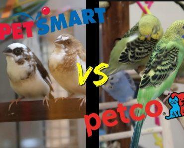 PETSMART vs PETCO | Who has better BIRD care?