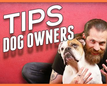 9 Tips for Living With a Dog – Foundations for Dog Owners