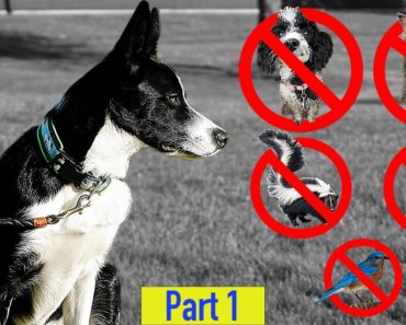 Teach Your Dog To Leave It And Ignore Distractions – Professional Dog Training Tips