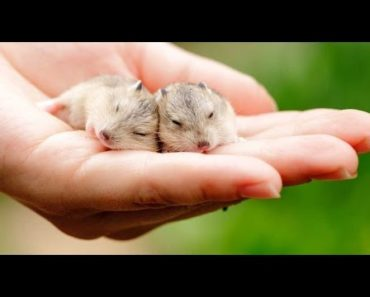 Most Popular Small Pets to Own