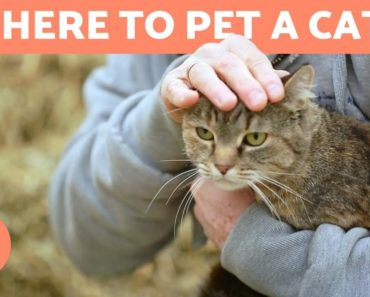 Where to Pet a Cat? – FAVORITE PLACES and TIPS