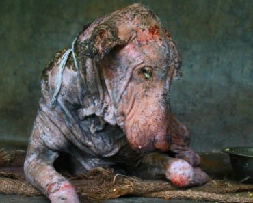 Amazing transformation of sick dog who had given up hope