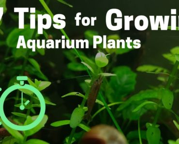 7 Tips for Growing Freshwater Plants in an Aquarium