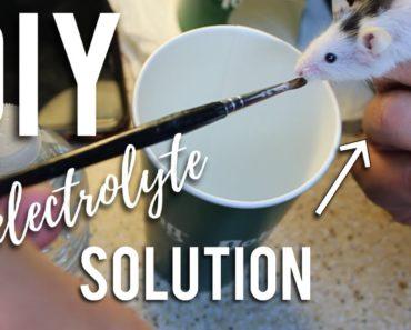 DIY Small Pet Electrolytes | Small Pet Vet Care/Medicine