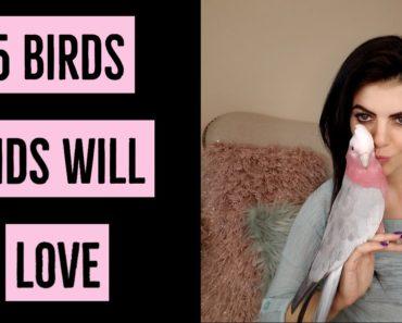 5 Pet Birds Great for Kids | PARRONT TIP TUESDAY