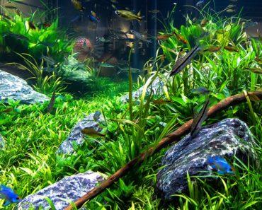 Aquarium Decorating Tips