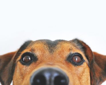Obedience Training For Your Dog