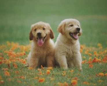 Easy Tips For House Breaking Your Puppy
