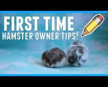Tips for first time hamster owners!