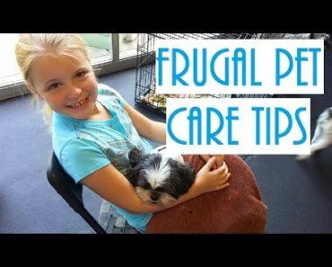Frugal Pet Care Tips