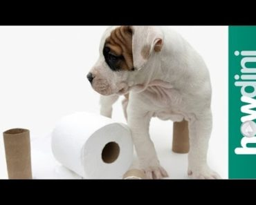 How To Potty Train a Puppy – How to House Train Your Dog
