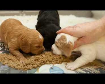 How to take care of a puppy in hindi (CARING TIPS) HII DOGGY TIMES