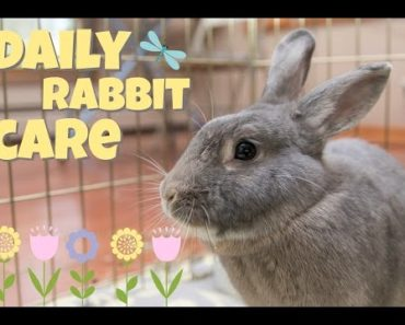 DAILY RABBIT CARE ?