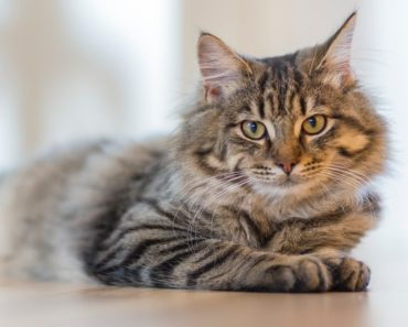 Why Cats Make Such Good Pets
