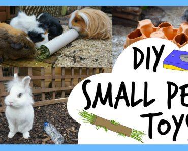DIY Small Pet Toys