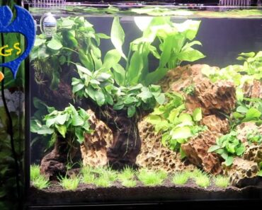 Best Ways To Maintain A Fish Tank! 10 Things You