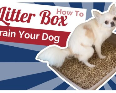 How to Litter Box Train Puppies and Dogs