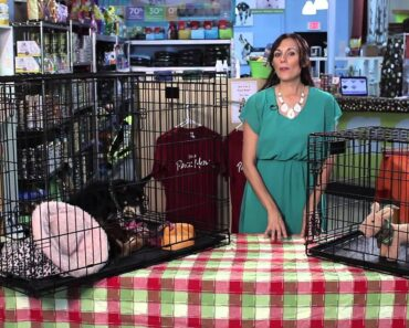 How Big of a Crate Does a Chihuahua Need? :