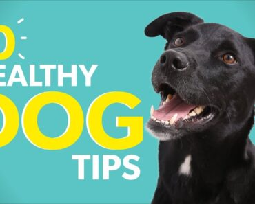 10 Healthy Dog Tips to Help Your Dog Live Longer