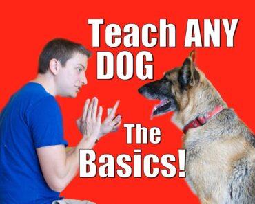 Dog Training 101: How to Train ANY DOG the Basics