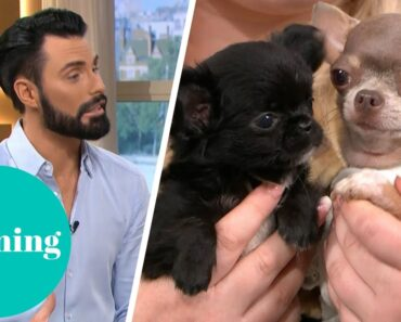 Is It Cruel to Breed Teacup Dogs?