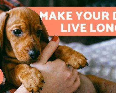 How to Make a Dog Live Longer