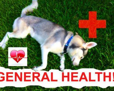 General Dog Health Tips! (Having a Healthy Dog)