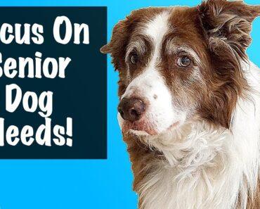 How To Care For A Senior Dog