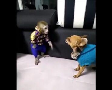 Dog vs Monkey
