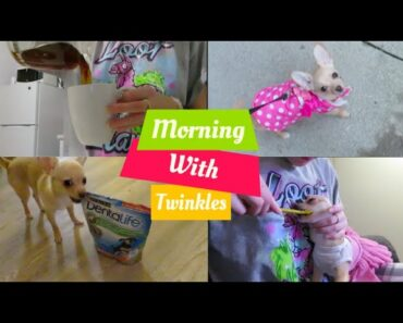 MORNING ROUTINE WITH MY TEACUP CHIHUAHUA PUPPY