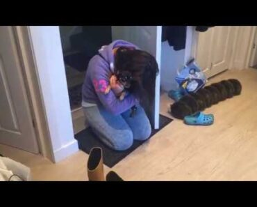 Chihuahua so excited to see owner after a week away
