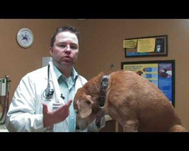 Dog Care Tips : Cures for Dog Shedding