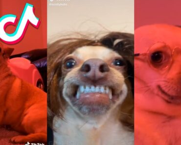 Funny, Angry, Crazy Animals From TikTok #1