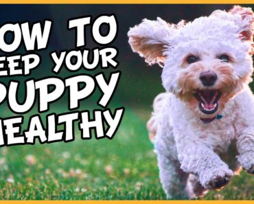 Essential Puppy Care: How to Keep a Puppy Healthy in