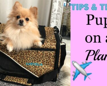 Tips for Flying With Your Dog On A Plane |
