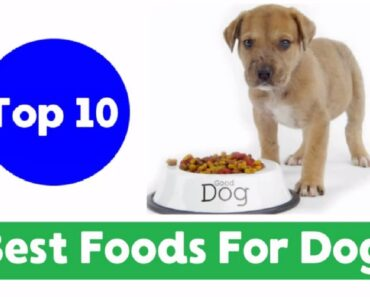 Top 10 Best Human Foods for Dogs 2018 !! Dog