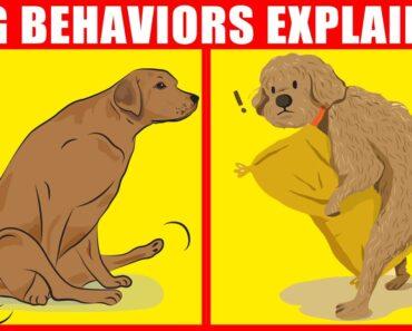 The Meaning Behind 21 Strangest Dog Behaviors