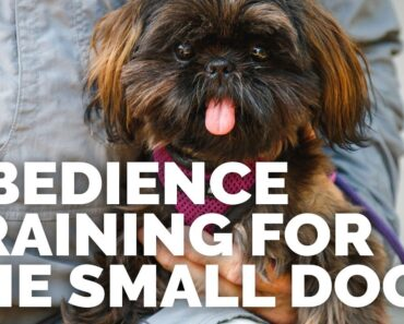 Obedience Training for the Small Dog