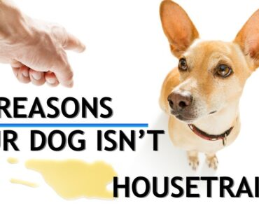 7 Reasons You're Having Trouble Housetraining Your Dog! (PLUS the