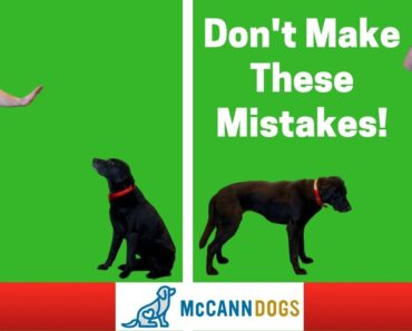 """Teaching A Dog To """"Stay""""- 3 Common Mistakes"""